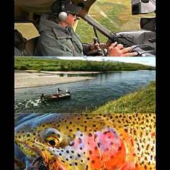 AlaskaFlyFishingJobs.com Guide needed August-September at Bristol Bay Lodge. See www.alaskaflyfishingjobs.com for requirements and application. #flyfishing #alaska #bristolbaylodge #catchandrelease #alaskaflyfishingjobs