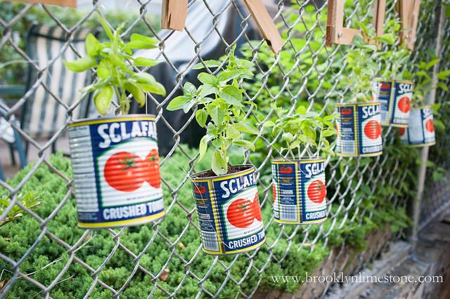 Grow Basil Chain Link Fence Garden | www.brooklynlimestone.com