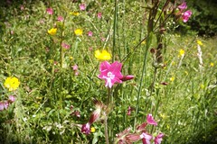 HolderRed Campion credit Andy Slater
