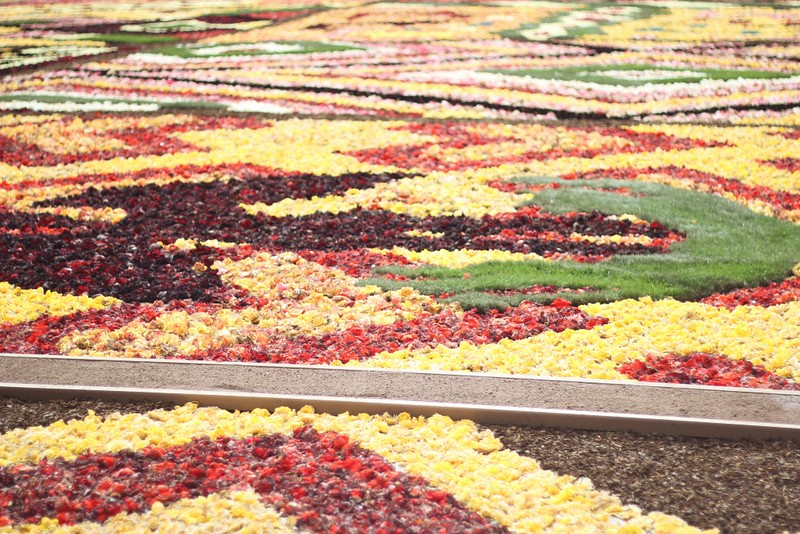 flower carpet close-up