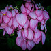 2014 - Mexico - Tuxtla Chico - Church Flower