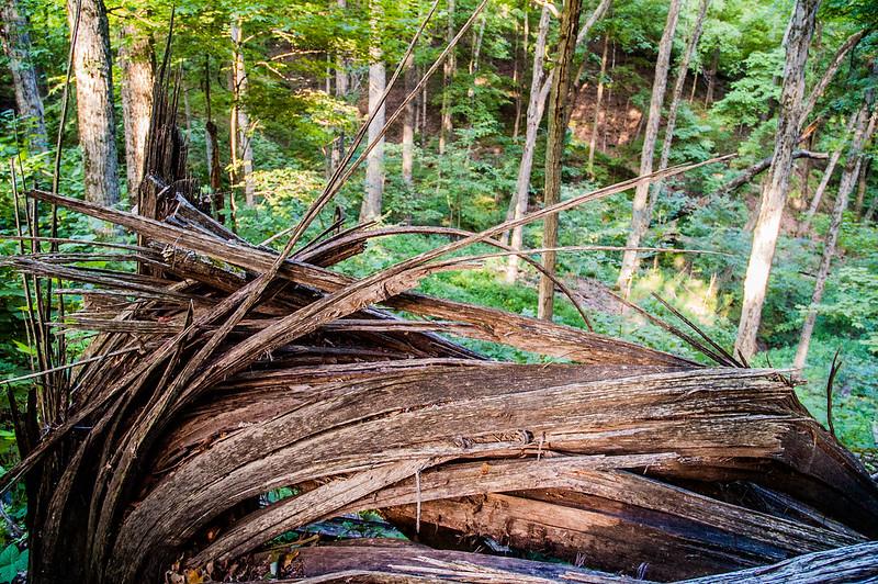 Hitz-Rhodehamel Woods - July 24, 2014