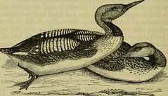 """Image from page 213 of """"Reptiles and birds : a popular account of their various orders, with a description of the habits and economy of the most interesting"""" (1883)"""