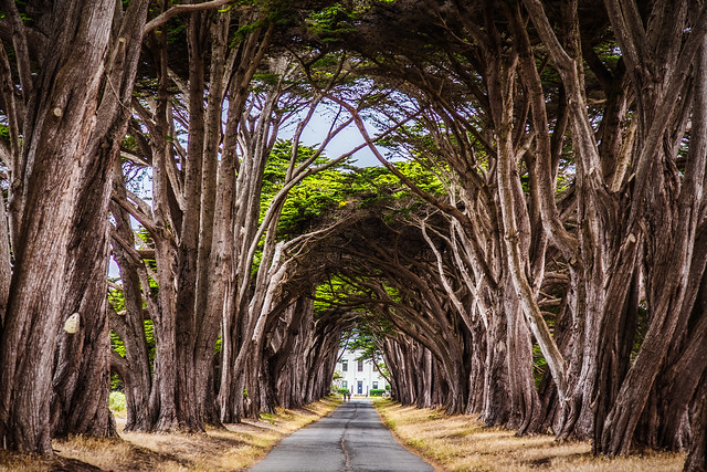Cypress Tunnel at Point Reyes