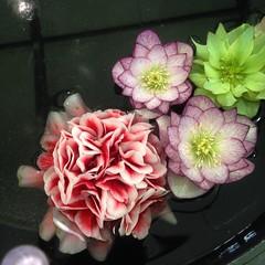 #pretty #lotus #flowers