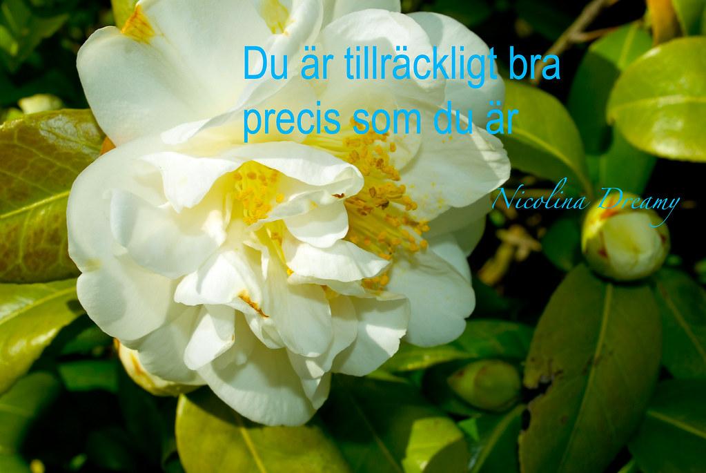 blogg-nicolinadreamy (47 av 1)