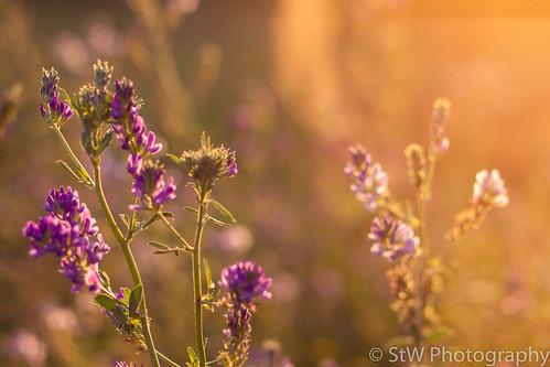 ©St-Wede-Naturaufnahmen-009.jpg