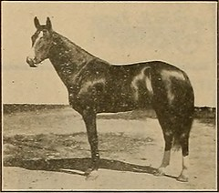 "Image from page 345 of ""Breeder and sportsman"" (1882)"