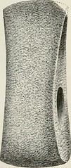 """Image from page 192 of """"The ancient stone implements, weapons, and ornaments, of Great Britain"""" (1872)"""