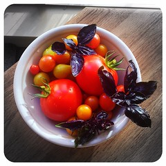 Today's tiny urban garden harvest was an assortment of tomatoes and purple basil. Thinking Caprese salad for dinner tonight. Mmm....