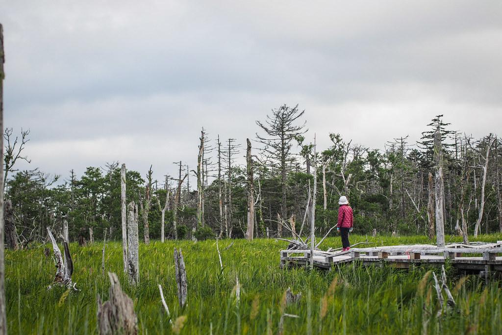 Coastal marshlands near Nemuro City, Hokkaido, Japan