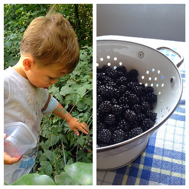 Saturday berry picking for a lazy Sunday afternoon pie.