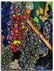 aftrenoon sun on grapes #2