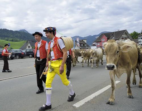 animals geotagged schweiz switzerland cow nikon suisse bauer che kühe alpabfahrt sennen tracht bauern nikonshooter urnäsch kantonappenzellausserrhoden nikonschweiz nikkor18200mmvrii geosetter capturenx2 nikonswitzerland viewnx2 geo:lat=4731803394 geo:lon=928438805