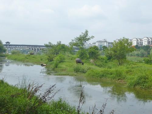 Jiangxi-Wuyuan (3)