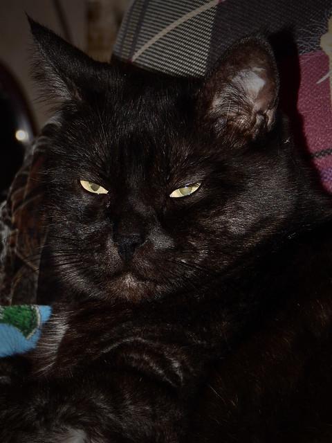 кот Муся щурится
