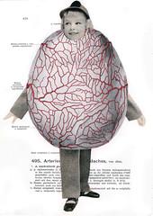 de anatomische les #37