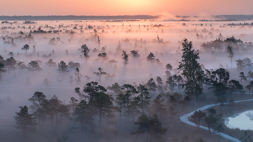 morning fog sunrise swamp wetlands bog ķemeri ķemerinationalpark