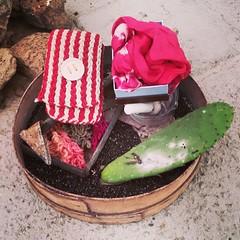 Preparado el bodegón de la cochinilla de Lanzarote @asocmilana para una entrevista en Televisión Canaria, en la Feria de Artesanía de Lanzarote. Mancha Blanca. Tinajo.  #naturaldye #cochinilladelanzarote #cochineal #cochinilla #bodegón #artesania #Canaria