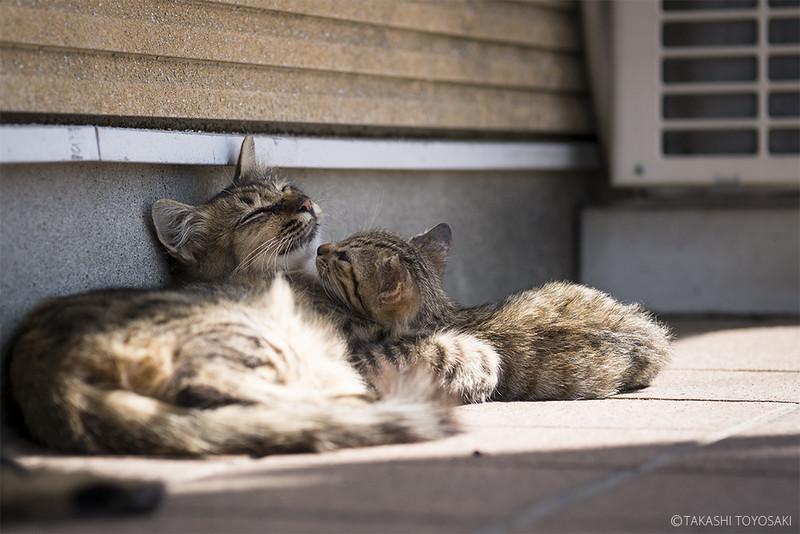 Cat Memories 2014/09/16