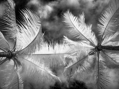 Ethereal Palm Trees