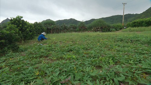蘭嶼特區計畫認定傳統領域是國有土地