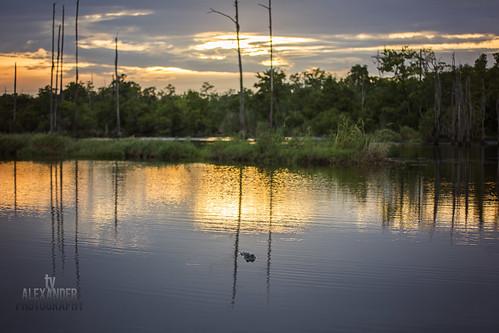 sunset canon louisiana gator aligator bayou swamp madisonville 5dmarkiii sigma70200mmf28exdgapooshsm tyalexanderphotography northshorephotographer