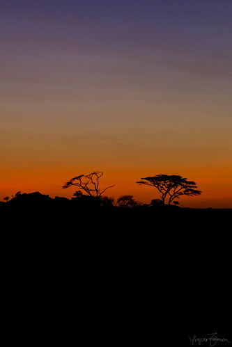 africa sunrise tanzania dawn nationalpark natur before safari afrika serengeti ferie soloppgang landskap nasjonalpark