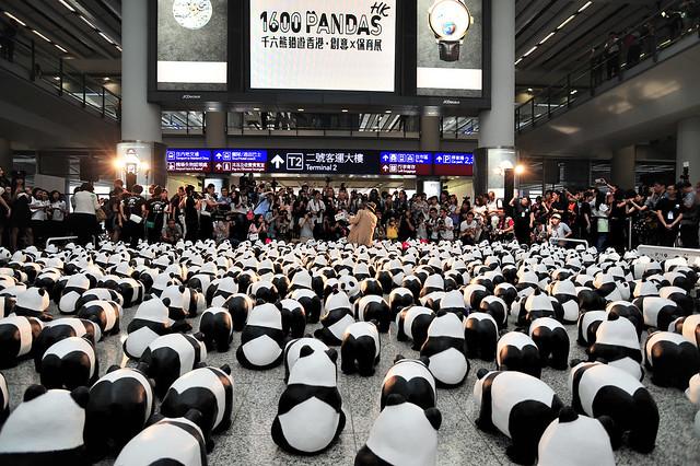 The pandas at the airport