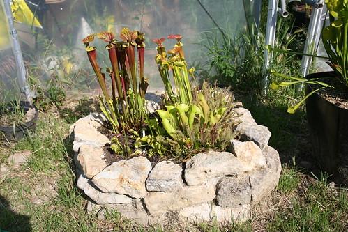 plantes2014 092