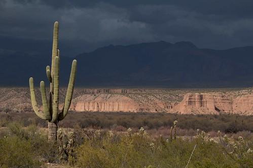 arizona usa mountains cacti landscapes flickr desert unitedstatesofamerica gps 2013 pinalcounty sanpedrorivervalley chollacacti saguarocactuscarnegieagigantea camcanonrebelt3i jumpingchollacactuscylindropuntiafulgidachainfruitcholla