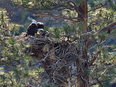 2014 Eagle Nest at Smith Rock State Park
