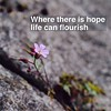 Where there is hope...