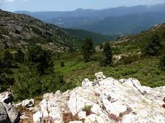 Sentier de la crête Vaccia - Cavalletti : le vallon du ruisseau de Ciambaldu