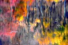 Beautiful Abstract Autumn Reflection