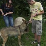 Ik met de wolf