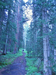 Beautiful Forest Above Telluride