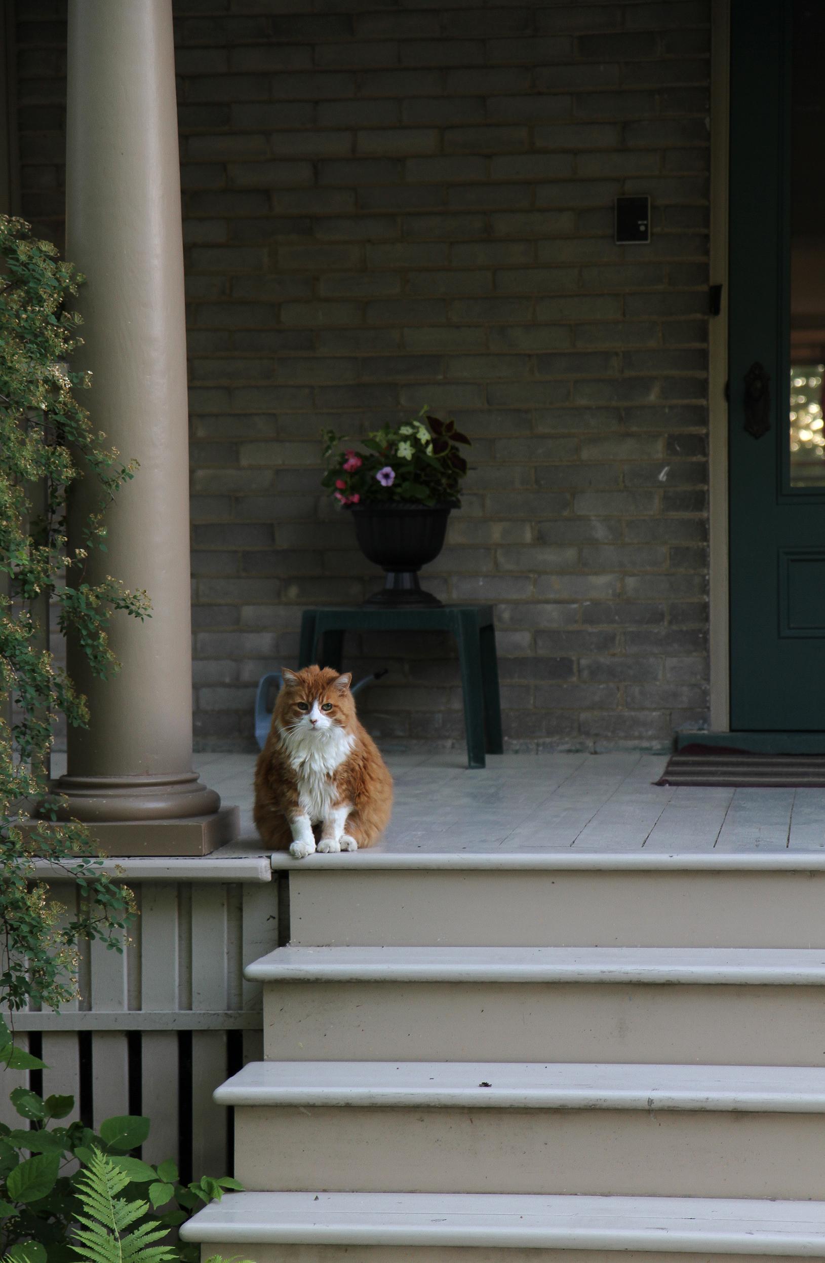 porch kitty