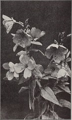 """Image from page 316 of """"The garden bluebook;"""" (1915)"""