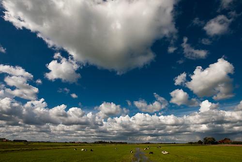 sky cloud holland dutch grass clouds cow cows thenetherlands bluesky polder dutchsky klaracolor klarathomas