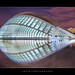 Hemisferic In The City of Arts and Sciences, Valencia, Spain :: HDR by :: Artie | Photography ::
