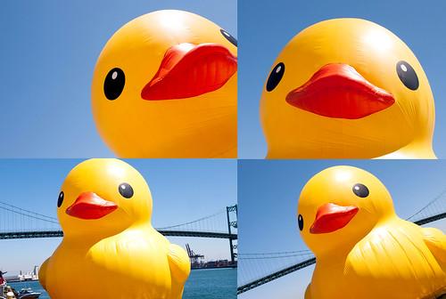 duck30