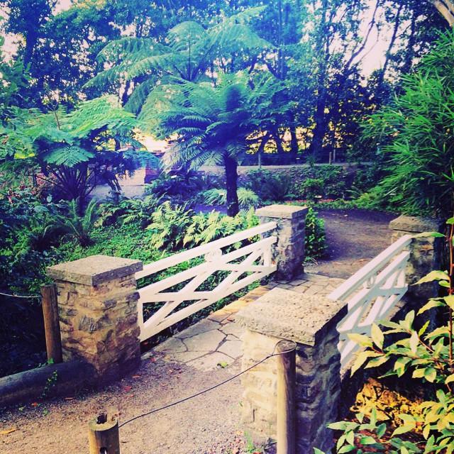 En el jardín botánico