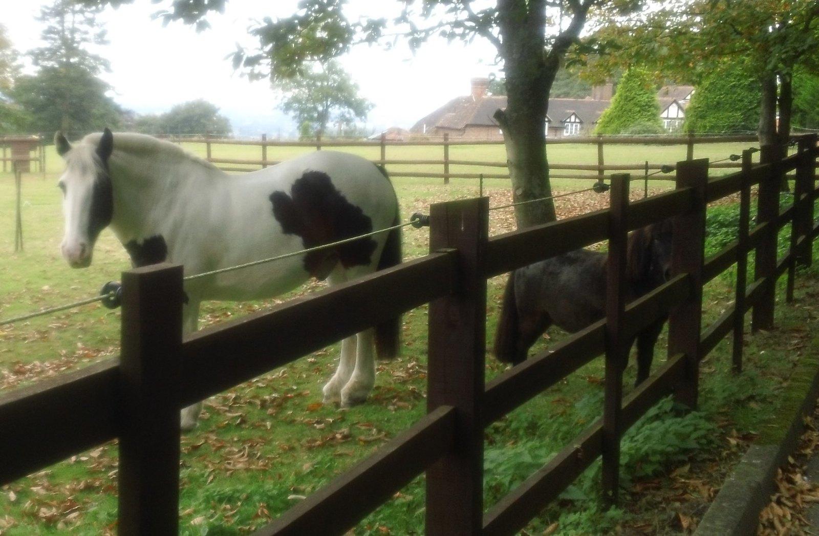 4 legged friends Near Charing, Kent