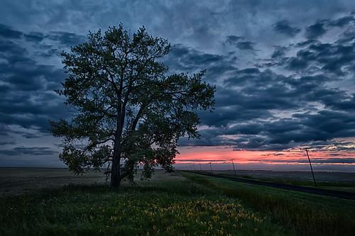sunset canada tree clouds manitoba dirtroad prairie telephonepoles aubigny prairiefields hyrdopoles