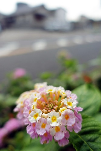 The flowers in commuting 2014/09 No.4.
