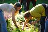 HDS Community Garden