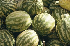 Watermelons in Tunisia