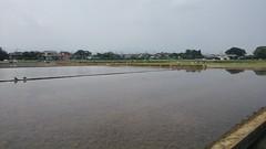 wetland, levee, reservoir, channel, coast, marsh,