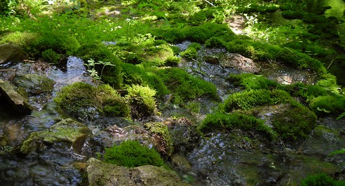 Mossy well II